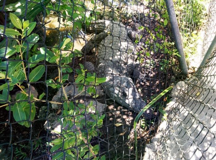 30 - tabara engleza in strainatate